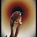 Wren At Sundown by Sue Melvin