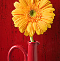 Yellow Daisy In Red Vase by Garry Gay