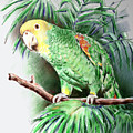 Yellow-headed Amazon Parrot by Arline Wagner