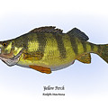 Yellow Perch by Ralph Martens