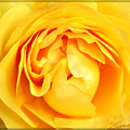 Yellow Petals by Cathie Tyler