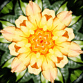 Yellow Rose Kaleidoscope  by Cathie Tyler