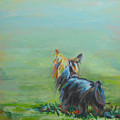 Yorkie in the Grass Print by Kimberly Santini