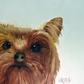 Yorkshire Terrier by Dick Larsen