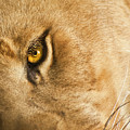 Your Lion Eye by Carolyn Marshall
