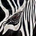 Zebra Eye by Ilse Kleyn