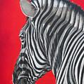 zebra in African sun by Ilse Kleyn