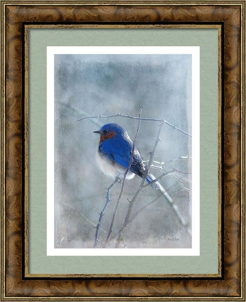 Fran J Scott - Blue Bird  Print