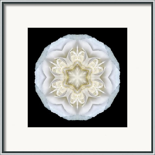 David J Bookbinder - White Begonia II Flower M... Print