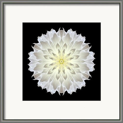 David J Bookbinder - Giant White Dahlia Flower... Print