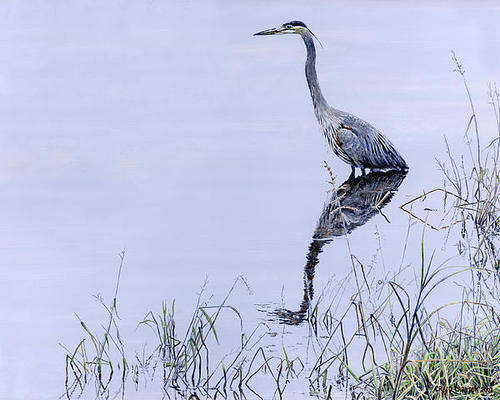 Craig Carlson - Marsh Reflections - Great... Print