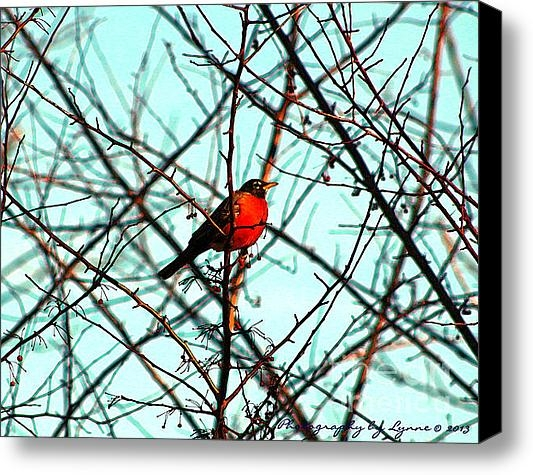 Gena Weiser - Bright Red Robin Print