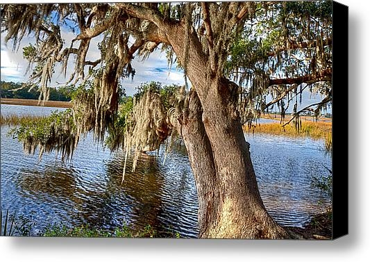 Walt  Baker - Low Country Creek Print