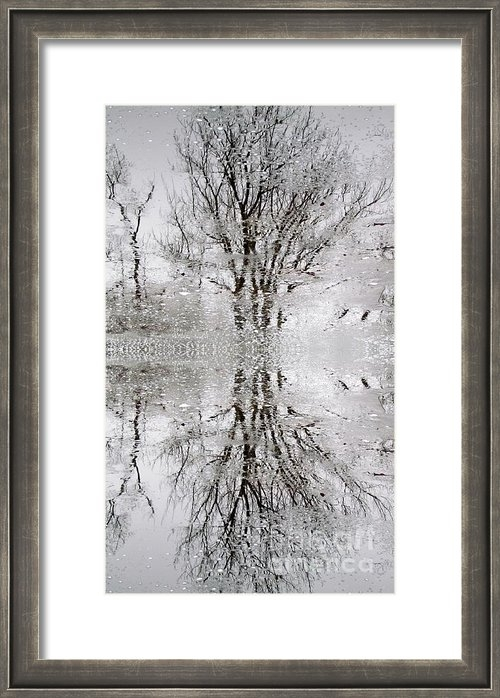 Lili Feinstein - Winter Abstract Print