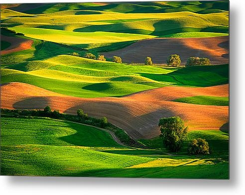 Inge Johnsson - Palouse Fields Print
