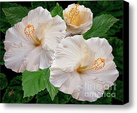 Ben and Raisa Gertsberg - Dreamy Blooms - White Hib... Print