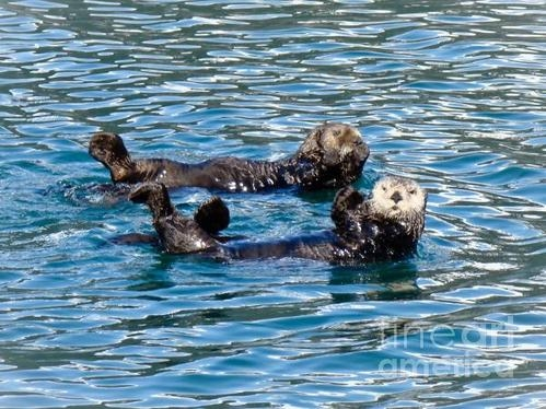 Dora Miller - Sea Otters 1 Print