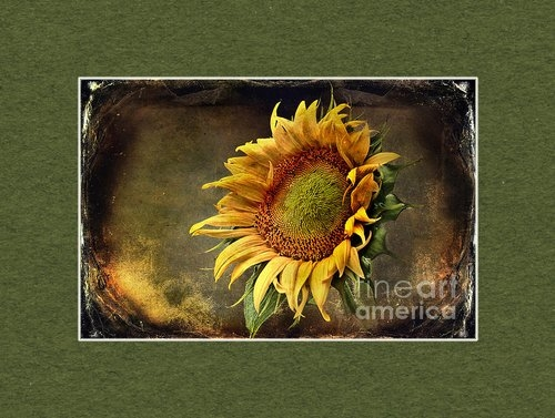 Sari Sauls - Sunflower Art 2 Print