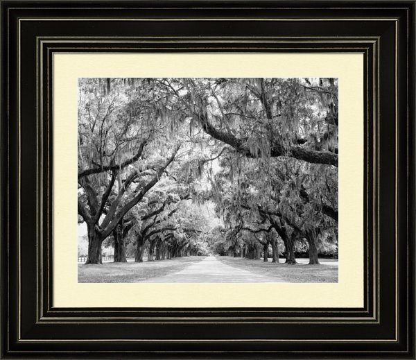 Stephanie McDowell - Avenue of Oaks Charleston... Print