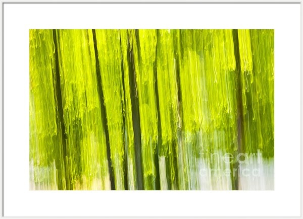 Elena Elisseeva - Green forest abstract Print
