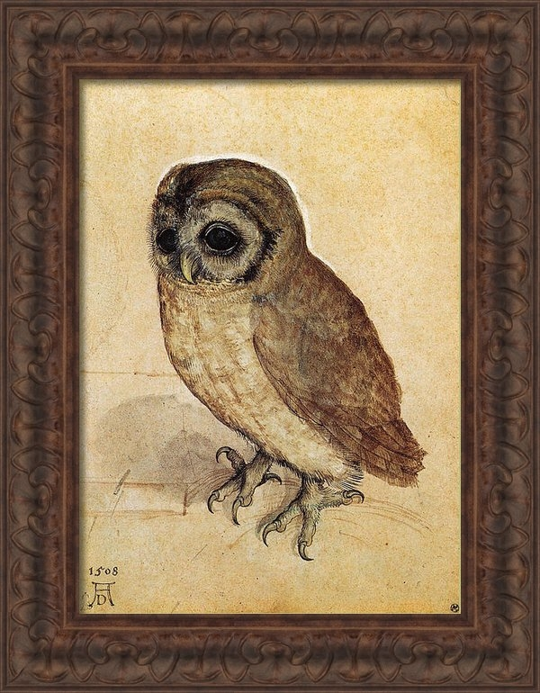 Albrecht Durer - The Little Owl 1508 Print