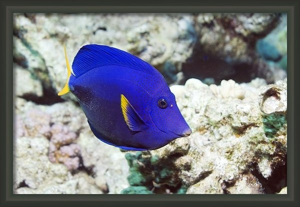 Georgette Douwma - Powder-blue Tang Print