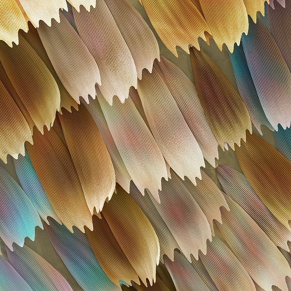 Power And Syred - Butterfly Wing Scales Print