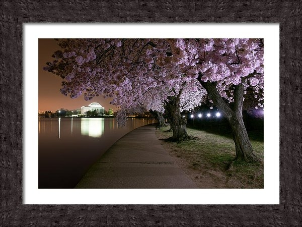 Bernard Chen - Blossom Night Fever Print