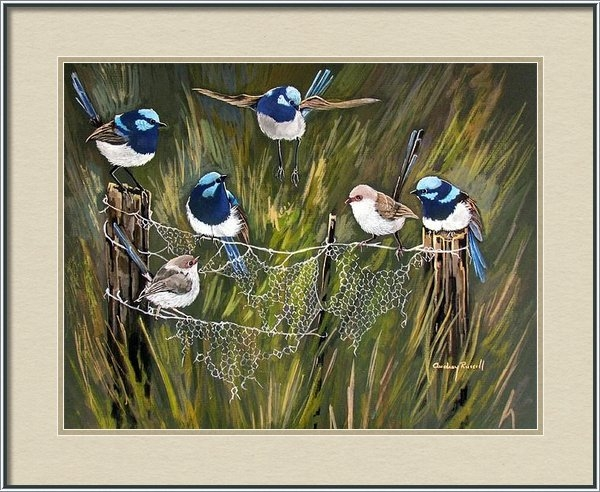 Audrey Russill - Blue Fairy wrens in the A... Print