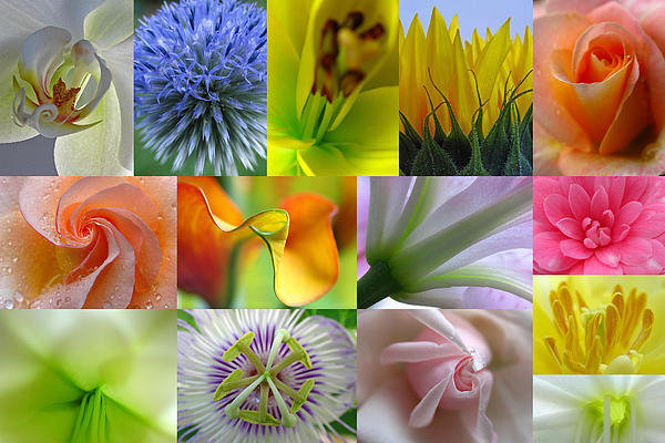 Juergen Roth - Flower Macro Photography Print
