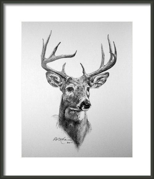 Roy Kaelin - Buck Deer Print