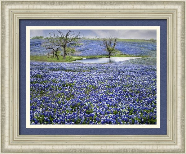 David and Carol Kelly - Bluebonnet Pond Print
