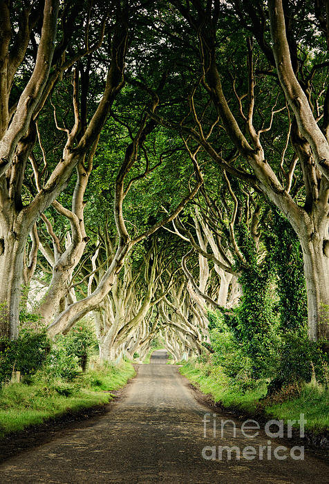 Michelle McMahon - Dark Hedges Print