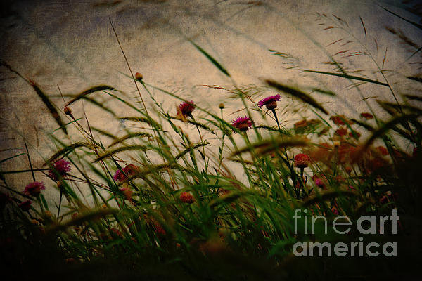 Lisa Holmgreen - Windswept Weeds and Wildf... Print