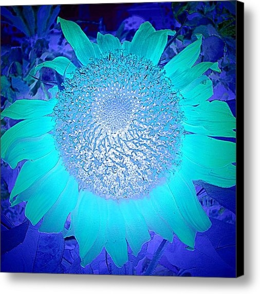 Ninie AG - Sunflower In Blue Print