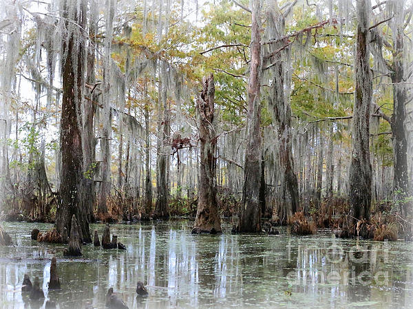 Carol Groenen - Down on the Bayou - Digit... Print