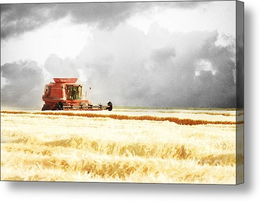 Cindy Singleton - Harvesting the Grain Print