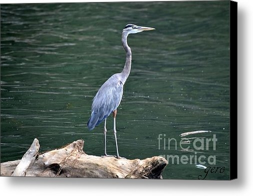 Gero - Great Blue Heron on Log Print