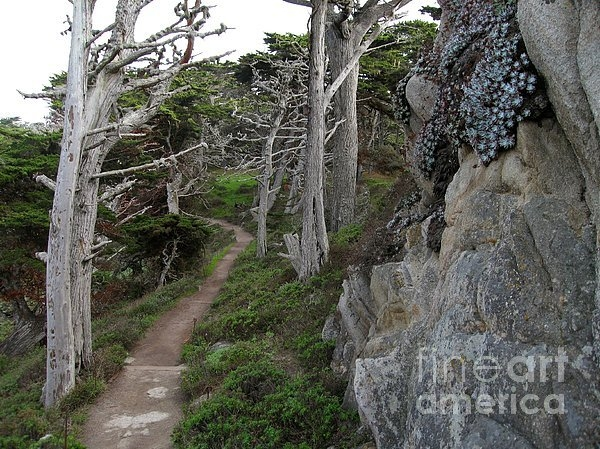 James B Toy - Cypress Grove Trail Print