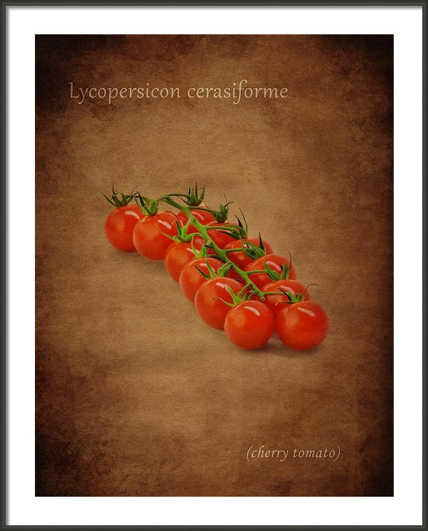 Mark Rogan - Cherry Tomato Print