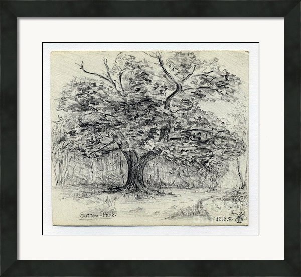 John Chatterley - Oak Tree Print