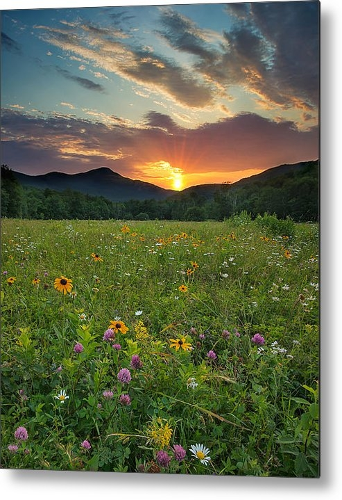 Darylann Leonard Photography - Wildflower Sunset Print