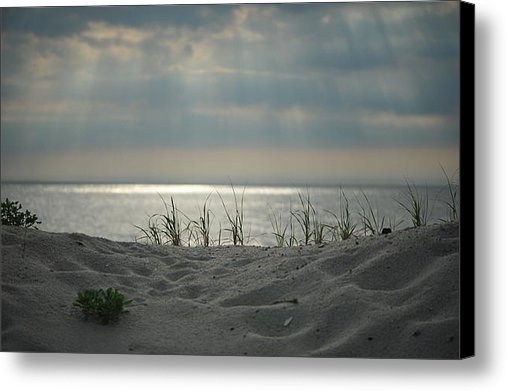 Don  Sipley - Dunes and Sea Print