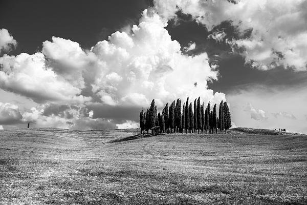 Tony Murray - Tuscany Print