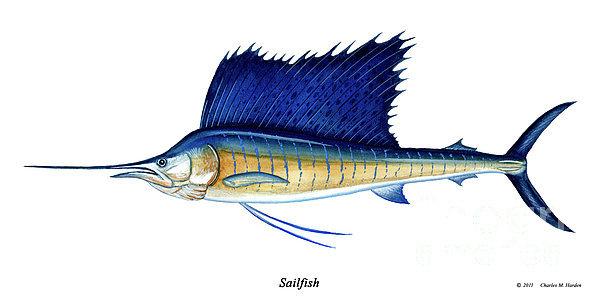 Charles Harden - Sailfish Print