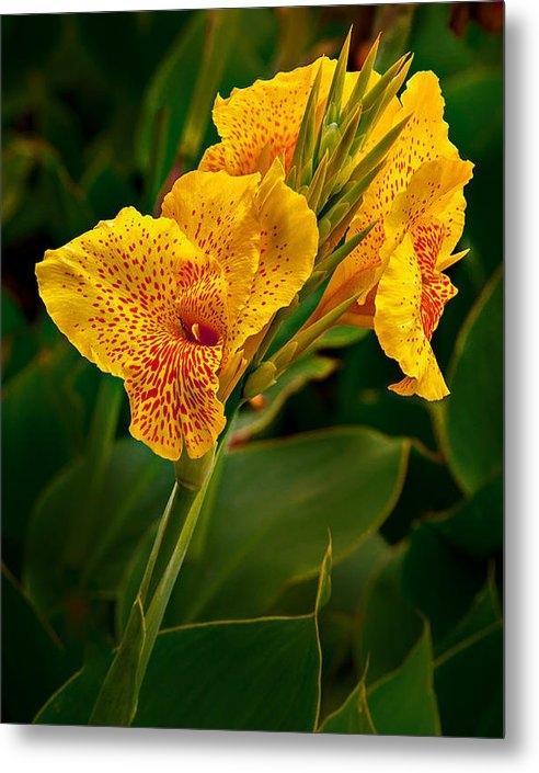 Mary Jo Allen - Canna Blossom Print