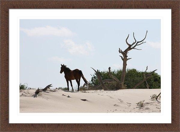 Glenda Barber - Wild Horse on Driftwood D... Print