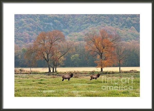 Jerry Owens - Arkansas Elk - 7802 Print