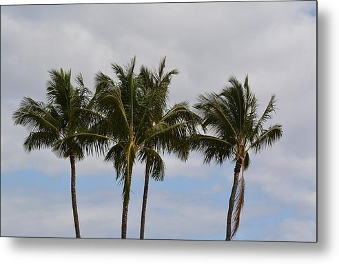 PS Photography - Three Palm Trees Print
