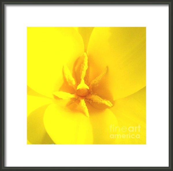 Spencer McKain - Inside a Yellow Tulip Print